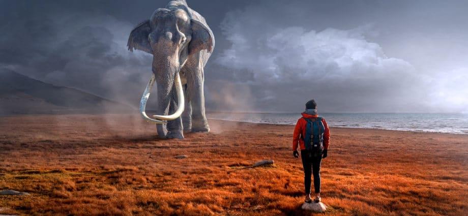 Ne demeure pas dans le passé,ne rêve pas du futur,concentre ton esprit sur le moment présent.